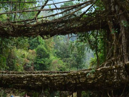 TREK TO DOUBLE DECKER LIVING ROOT BRIDGE